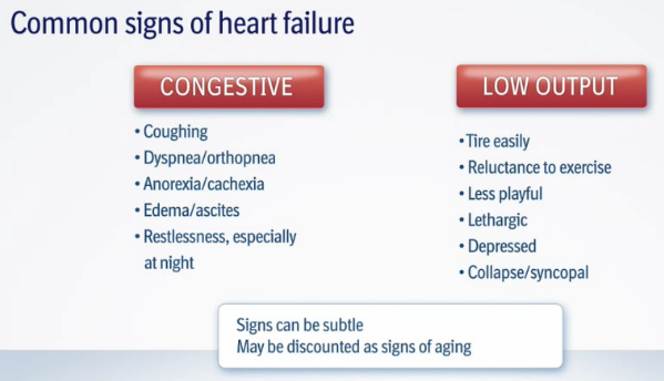Mitral Valve Disease And The Cavalier